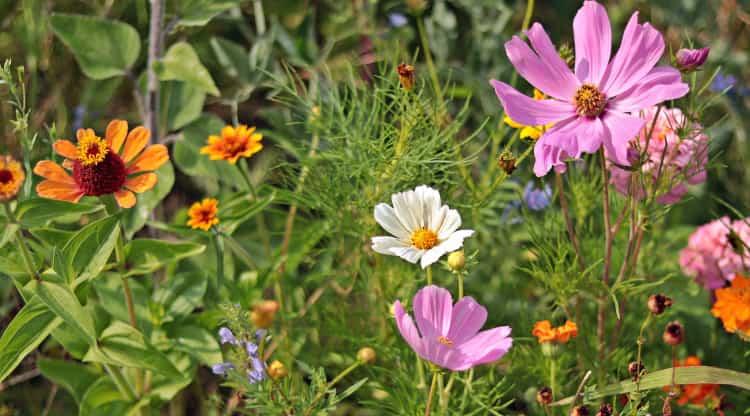 Łąka kwietna - pomysł na dużą przestrzeń w ogrodzie