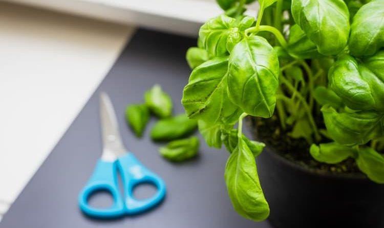Jak uprawiać zioła w domu i ogrodzie?