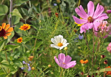 Jesienne rośliny samosiewne